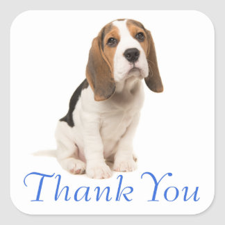 Beagle Puppy Dog Blue Thank You - Wedding Party Square Sticker