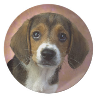 Beagle Puppy Dog Plate