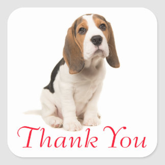 Beagle Puppy Dog Red Thank You - Wedding Party Square Sticker