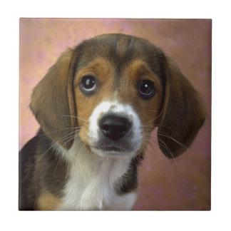 Beagle Puppy Dog Tile