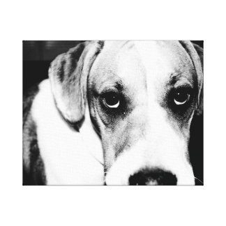 Beagle Puppy in Black and White Canvas Print