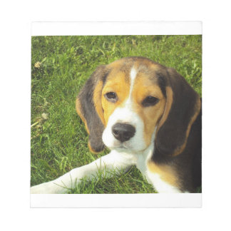 beagle puppy notepads