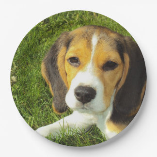 beagle puppy paper plate