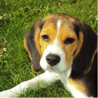 beagle puppy photo sculpture keychain