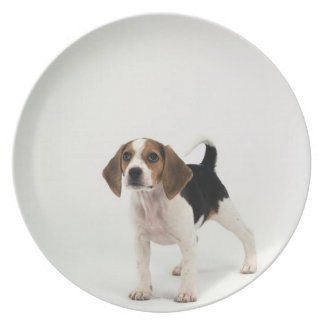 Beagle puppy plate