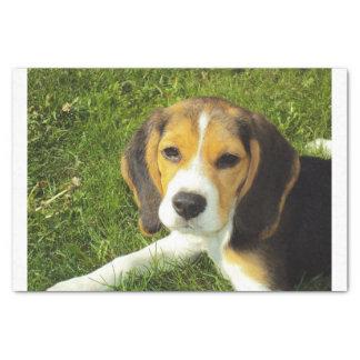 beagle puppy tissue paper