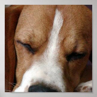 Beagle Snoozing Print