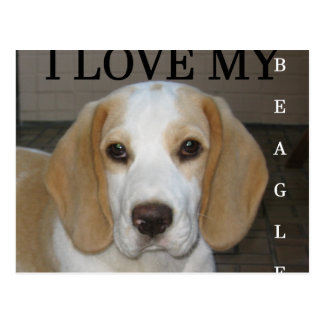 Beagle  tan and white love pic postcard
