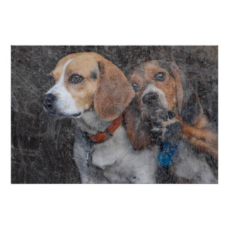Beagles Looking Out The Dirty Storm Door Poster