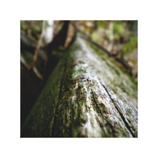 Beam Canvas Print