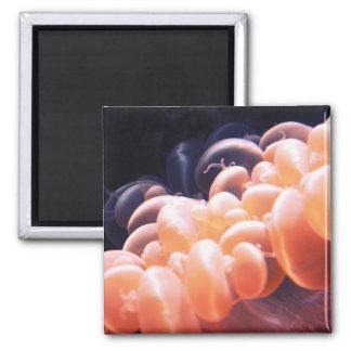 beans litnd 8x8 magnet