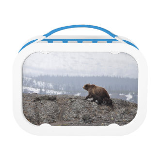 Bear And Cub Lunch Box