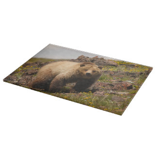 bear boards
