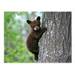 Bear Club Climbing a Tree Postcard