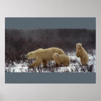 Bear Cubs Keepsake Memories Love Destiny Destiny's Poster