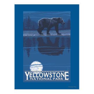 Bear in Moonlight - Yellowstone National Park Postcard