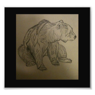 bear photograph