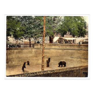 Bear pit, Berne, Switzerland vintage Photochrom Postcard