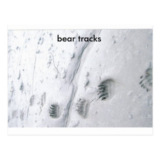 bear tracks, bear tracks postcard