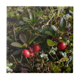 Bearberry, Arctostaphylus uva-ursi Ceramic Tiles