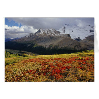 Bearberry in early autumn Athabasca Peak in the Greeting Card