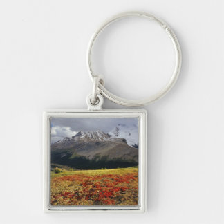 Bearberry in early autumn Athabasca Peak in the Key Chain