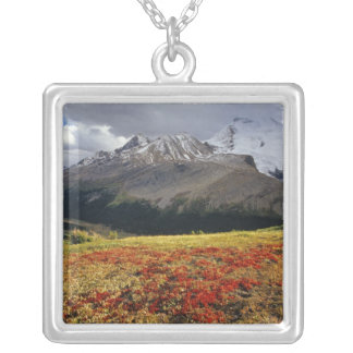 Bearberry in early autumn Athabasca Peak in the Pendant