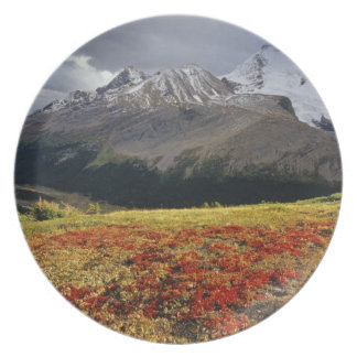 Bearberry in early autumn Athabasca Peak in the Plate