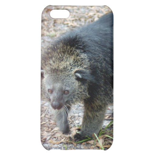 Bearcat i coque iPhone 5C
