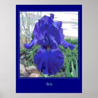 Bearded Blue Iris - Poster