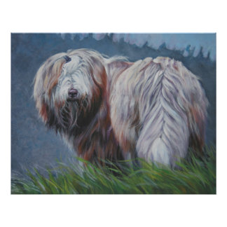 bearded collie art print