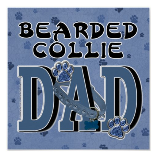 Bearded Collie DAD Poster