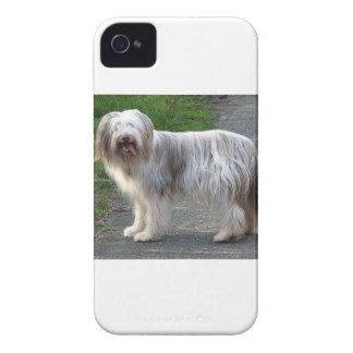 Bearded Collie Dog Case-Mate iPhone 4 Cases