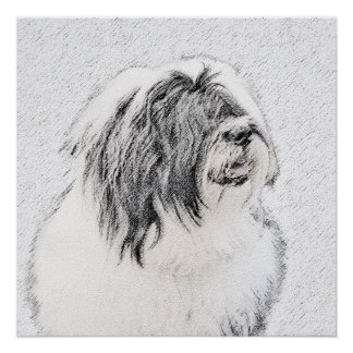 Bearded Collie (Drawing) Perfect Poster