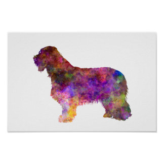 Bearded collie in watercolor poster