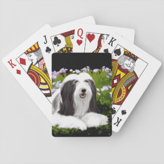 Bearded Collie Painting - Cute Original Dog Art Playing Cards