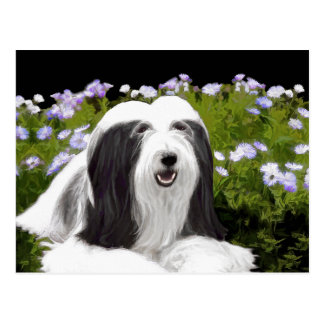 Bearded Collie Painting - Cute Original Dog Art Postcard