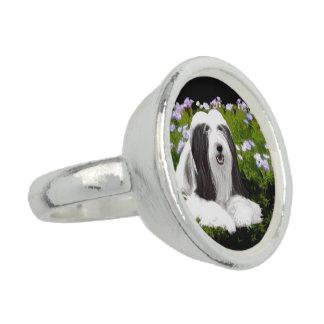 Bearded Collie Painting - Cute Original Dog Art Ring