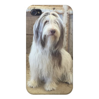 Bearded Collie Phone Case Iphone 4 iPhone 4/4S Cases
