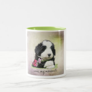 Bearded collie puppy Two-Tone coffee mug