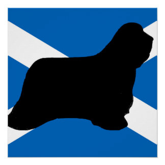 bearded collie silhouette Scotland flag Perfect Poster