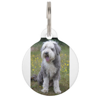 bearded collie sitting pet name tag