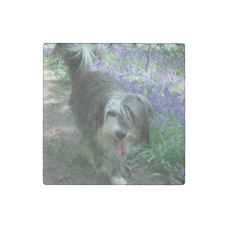 bearded collie walking stone magnets