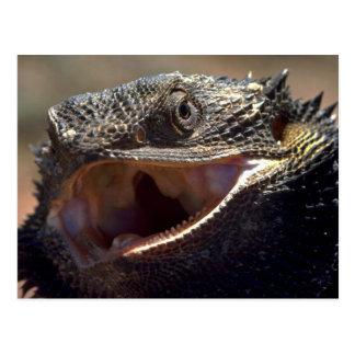 Bearded Dragon, Australia Postcard