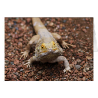 Bearded Dragon Card