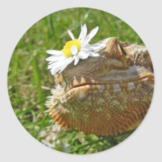 Bearded dragon classic round sticker