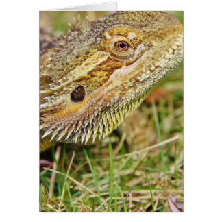Bearded Dragon Head Card