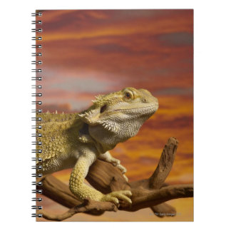 Bearded dragon (Pogona Vitticeps) on branch, Spiral Note Book