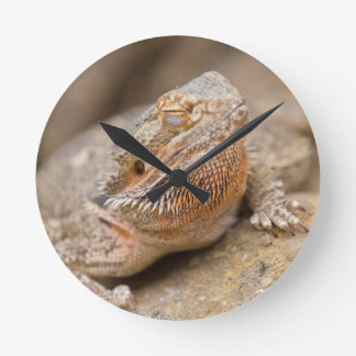 bearded dragon wallclock