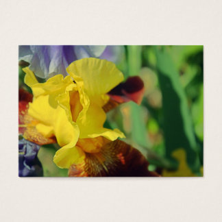Bearded Iris #1 Business Cards